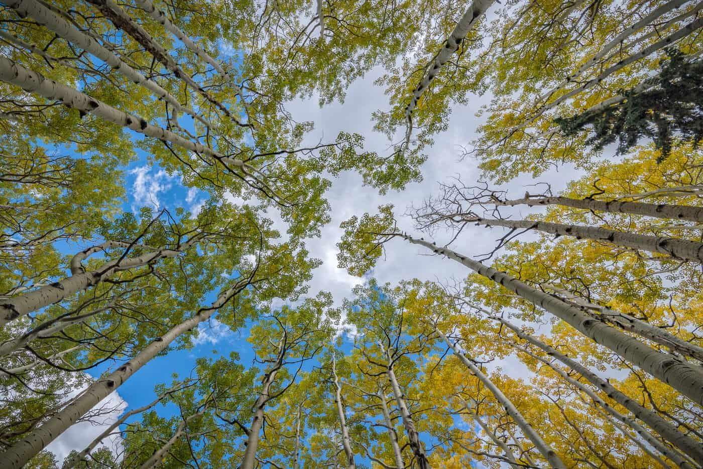 Looking Up at Lockett Meadow